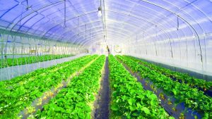 Greenhouse Tunnels Free State